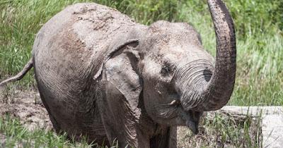 Tailandia es el destino favorito de los amantes de los elefantes.