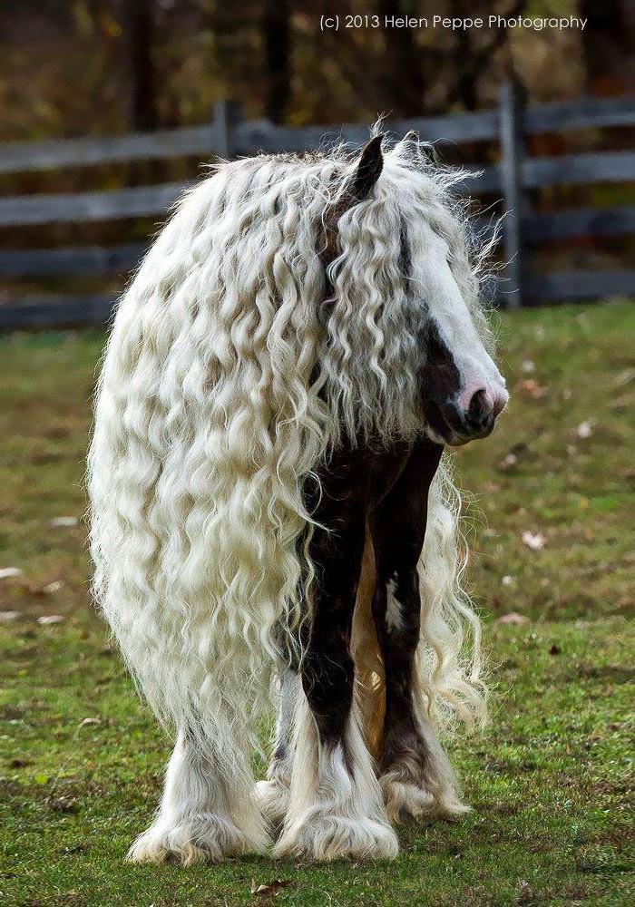 Animais cabeludos!