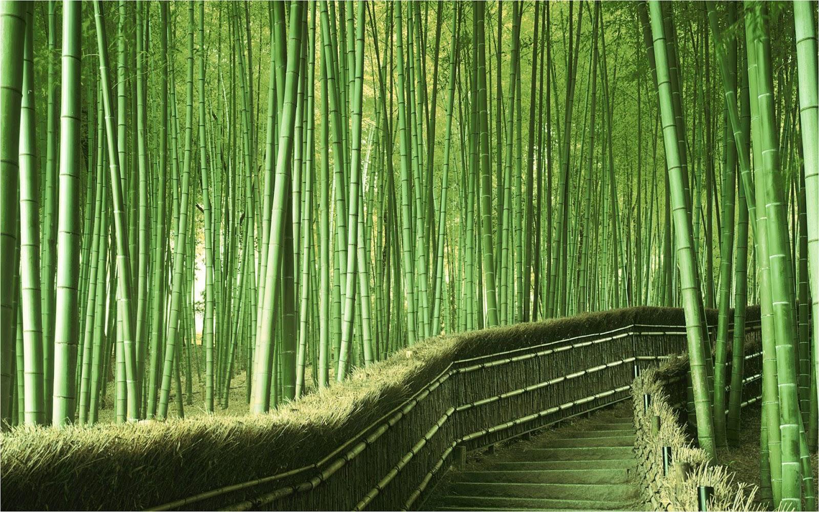 Maravilloso Bosque de Bambú, Kyoto 1
