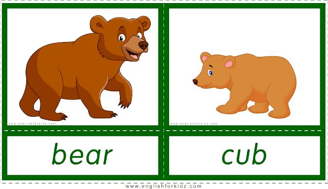 Animals and their babies -- bear - cub -- printable flashcards