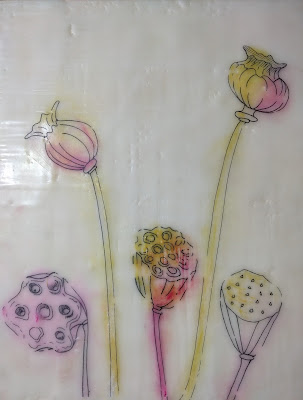 poppy lotus seed head drawing encaustic collage with pastel