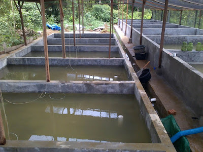Knowing The method of breeding with a Cement pool in Catfish Livestock Business Opportunities