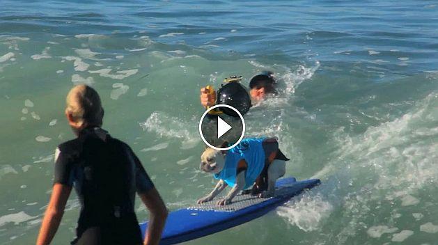 Hardcore Surfer Dogs