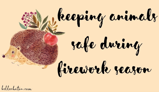 Keeping Animals and Pets Safe During Firework Season 2017