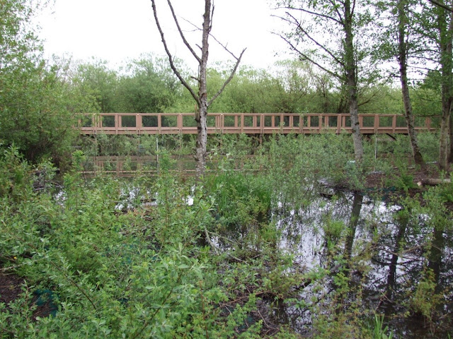 Picture of Springbrook Trail boardwalk over the Springbrook Creek wetland in Renton, Washington.