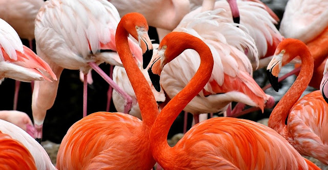 Image: Pink Flamingos, by Alexas_Fotos on Pixabay