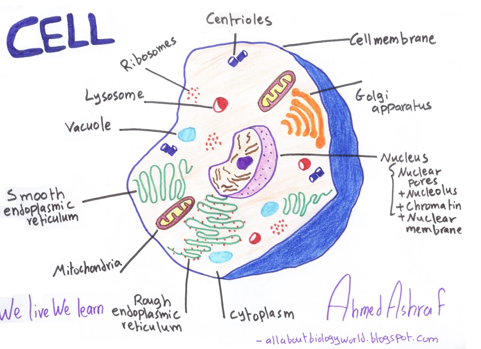 differences between animal cells and plant cells biology club difference between animal and plant [ 1600 x 1159 Pixel ]