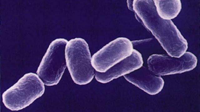 bacteria_vida