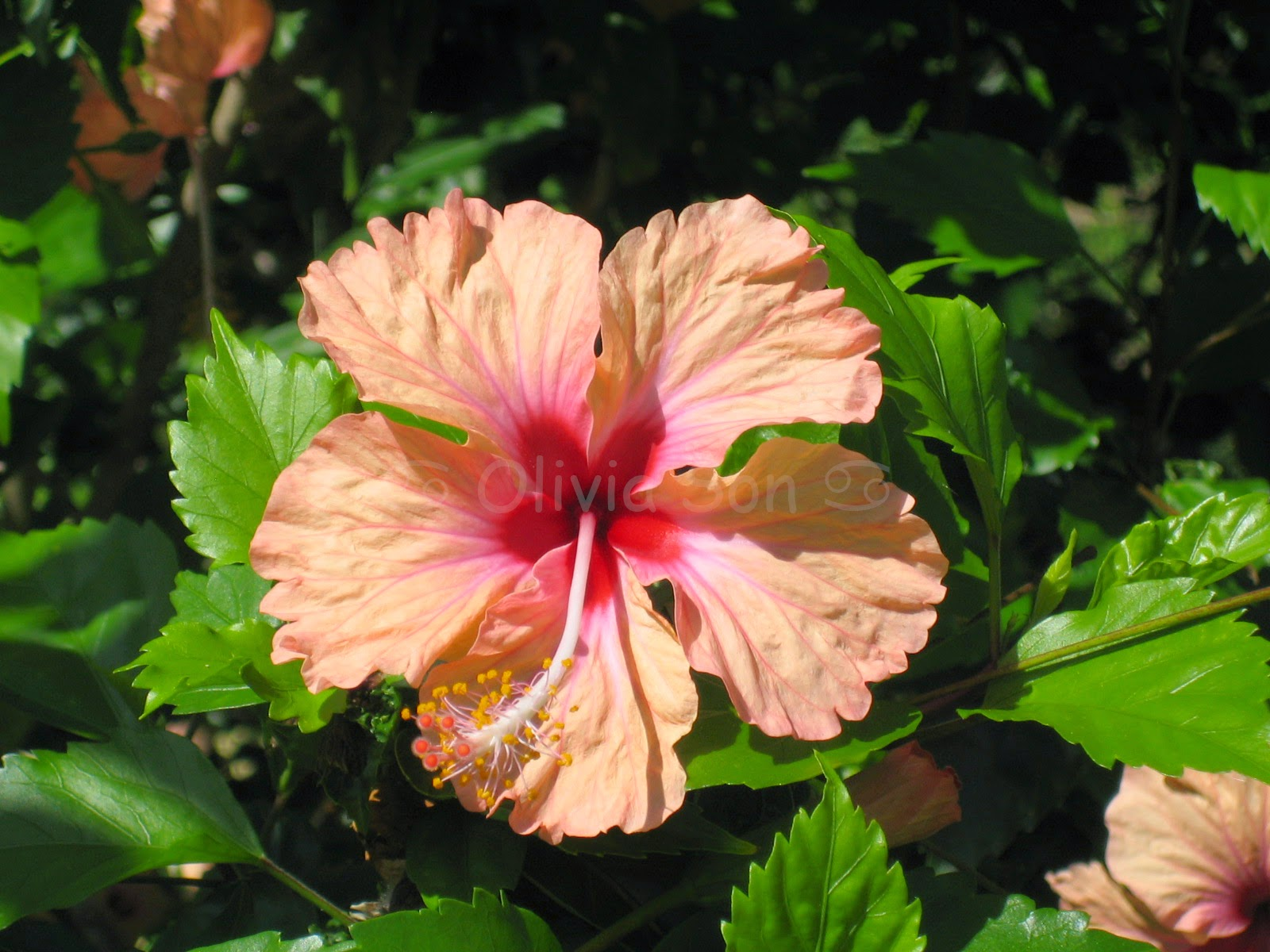 Fleurs, Martinique
