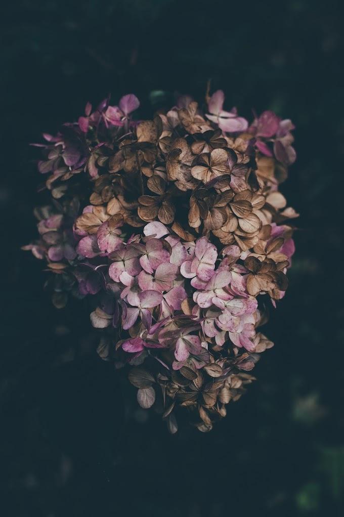 ดอกไม้สดที่แห้งแล้วยังอยู่ทนทานสีไม่เปลี่ยน