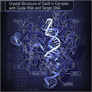 Crystal Structure of Cas9 in Complex with Guide RNA and Target DNA
