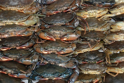 Mud Crab Manufacturers Production Process