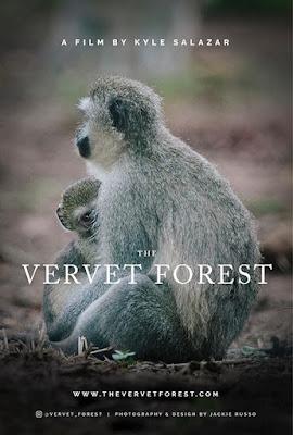 The Vervet Forest - Rörelse för djurrätt
