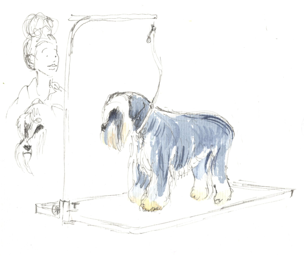 Banishing bad hair days at a fur babies beauty contest urban sketchers banishing bad hair days at a fur babies beauty contest solutioingenieria Image collections