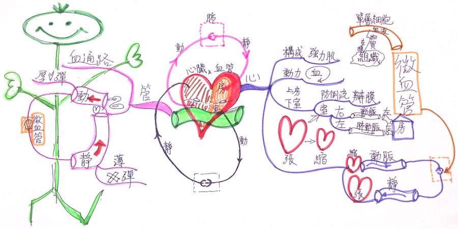 藍海學習計畫: 4-4 心臟與血管