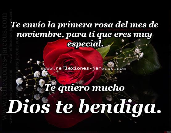 Te envío la primera rosa del mes de noviembre, para ti que eres muy especial. Te quiero mucho, Dios te bendiga