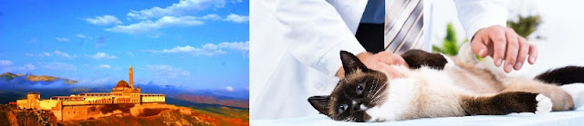 agri-veteriner-klinikleri