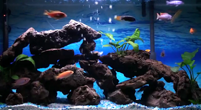 All About Aquarium Fish: Beginners 101: Adopting New Family Pets