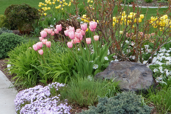 Vw garden tulip season for What season are tulips
