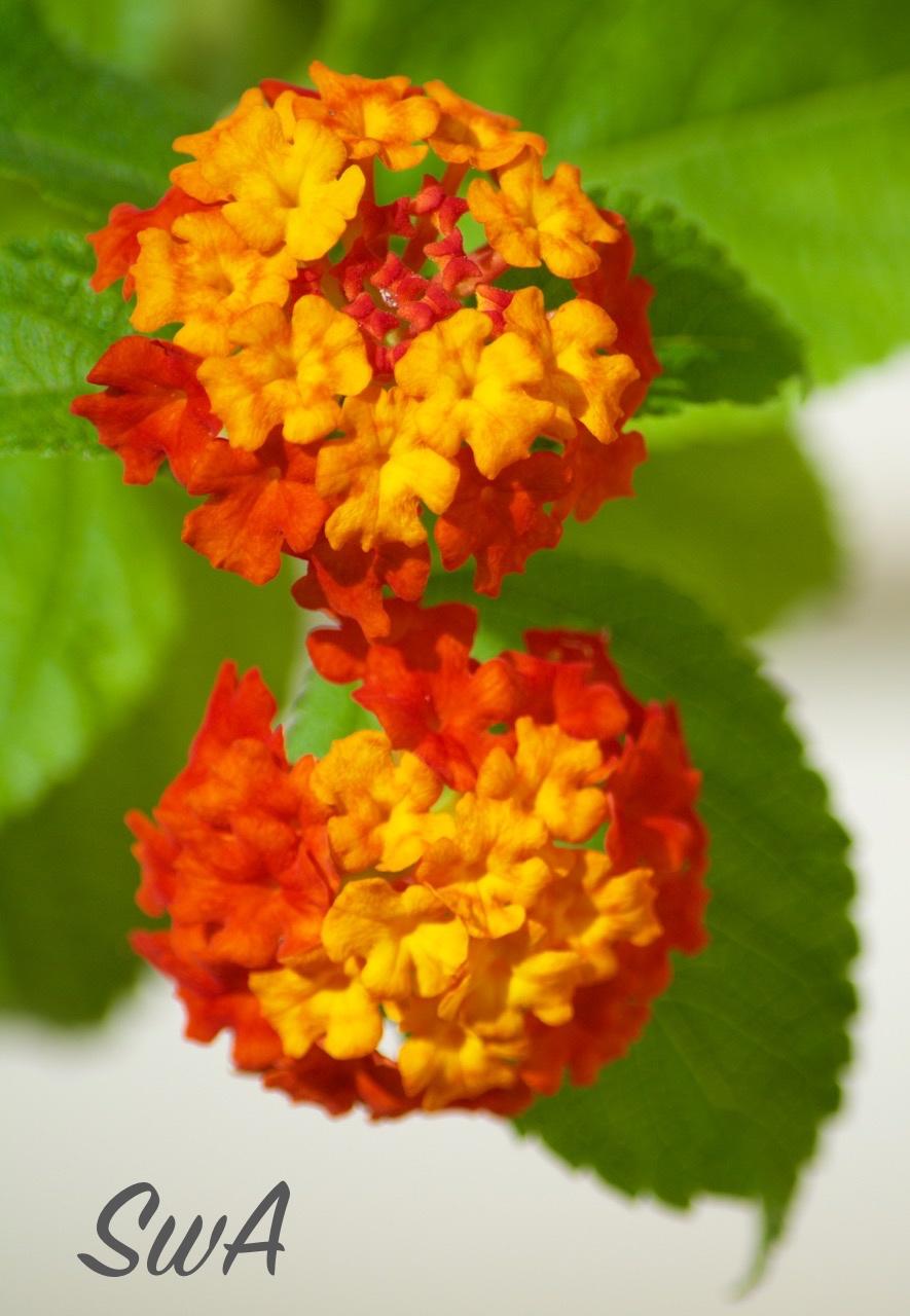 Tropical Biodiversity Santarm Par Brasil Flowers Looking