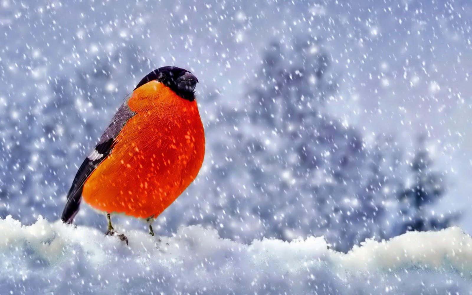 Vogel in de sneeuw tijdens de winter