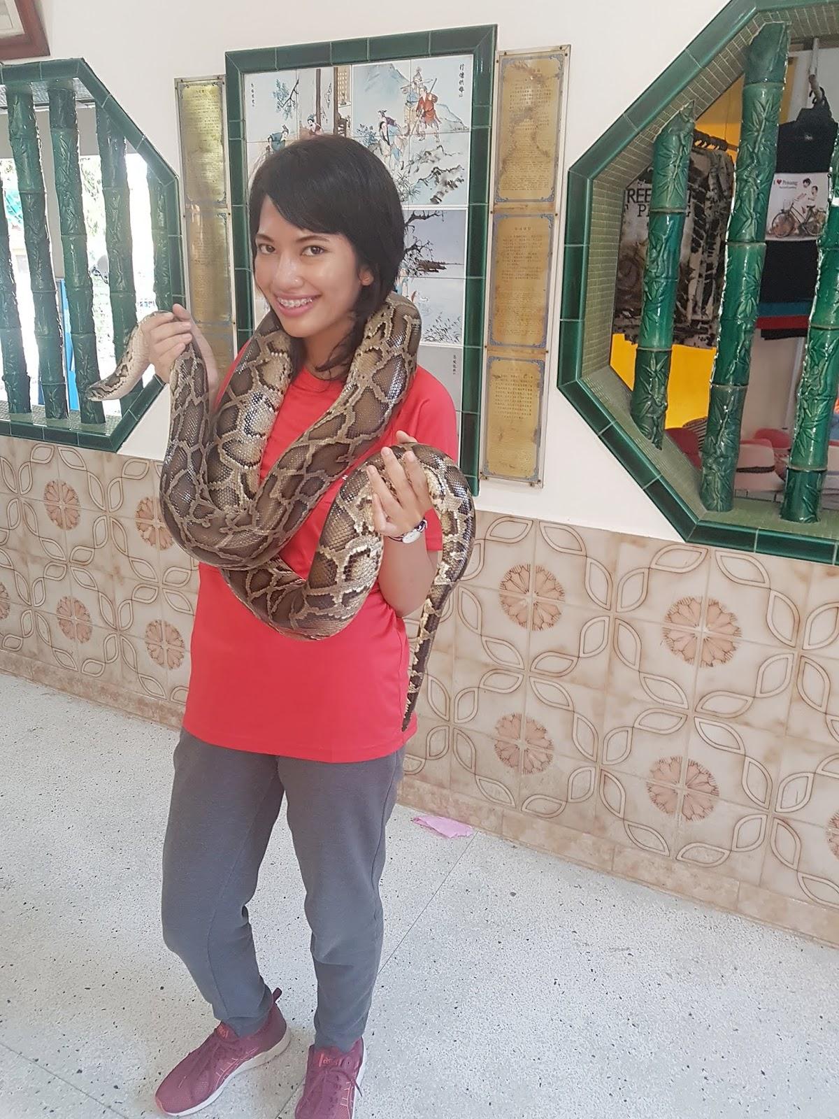 Hug a python a Penang Snake Temple