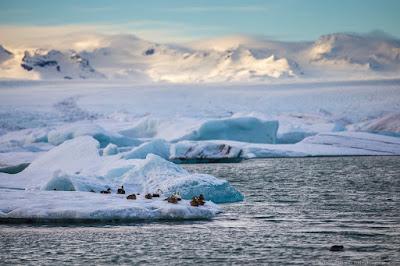 Jokulsarlon Glacier Lagoon Iceland_by_Laurence Norah-2