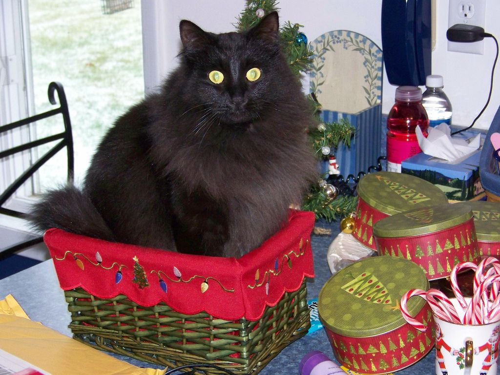 22. Cosmo in a basket by cseeman