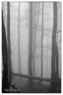 Ködös erdő egy Pádis-fennsík túrán