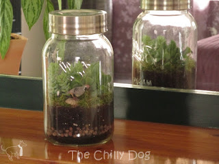 DIY Tutorial: How to make a simple glass jar terrarium