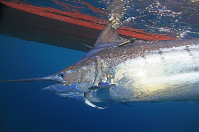 Global ocean de-oxygenation quantified