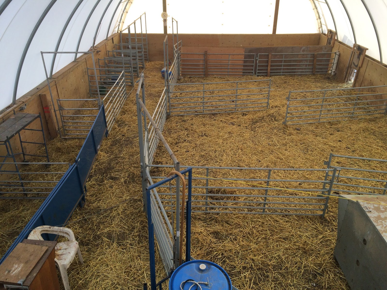 Living Sky Ranch Preparation For Lambing