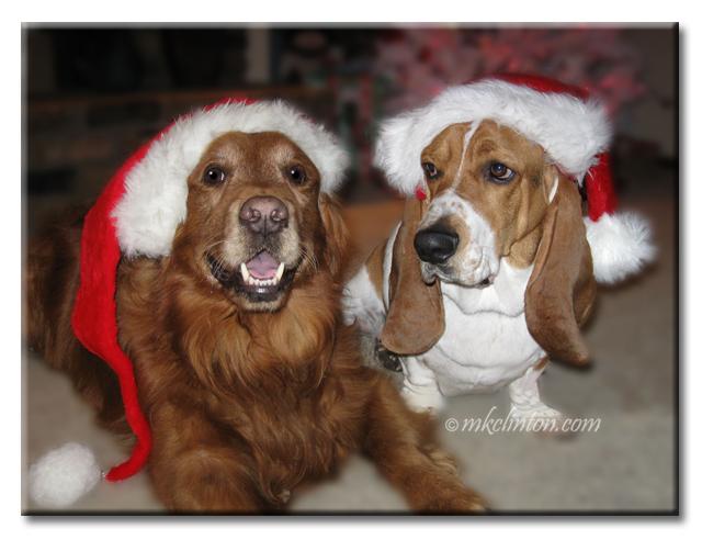 Santa Tucker and Bentley the Ho Ho Ho Hound