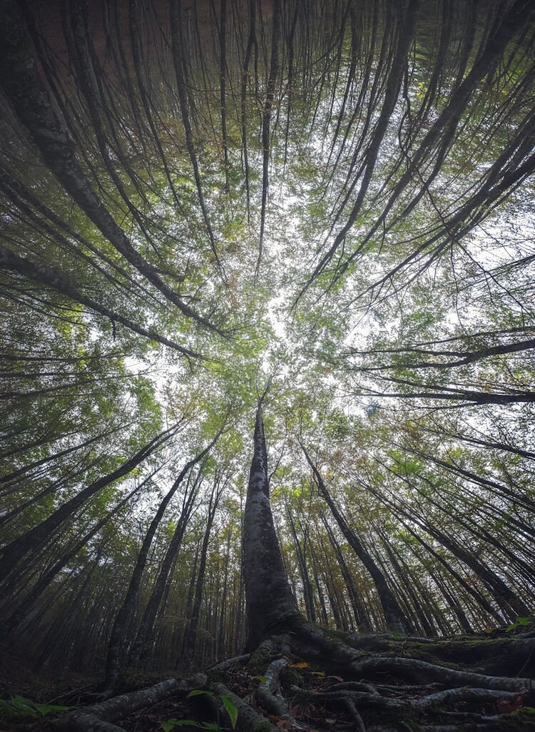 Awe-Inspiring Photographs Depict The Stunning Beauty Of The Forest From The Bottom Looking Up