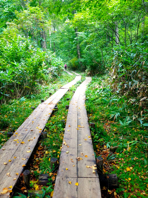 鳩待峠から山の鼻へ向かう木道にて。落ち葉の黄色から秋の訪れを感じる。