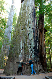 Wayne Pat Dunlap Giant Tree Rockefeller Forest Avenue of the Giants California