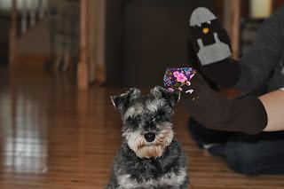 Millie the Dog Whisperer
