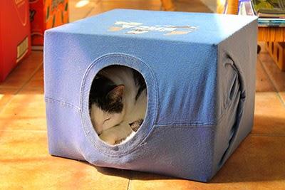 Cat enjoying their homemade tent