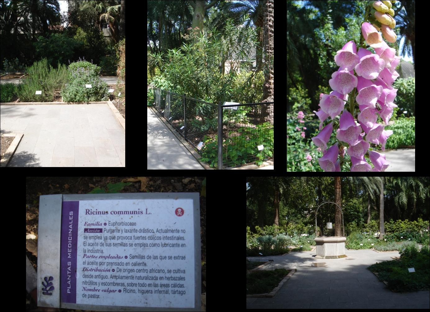 Territorio Naturaleza Jardin Botanico De Valencia Un Secreto Por Descubrir