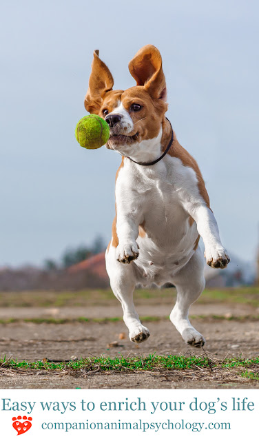 Easy ways to entertain your dog including food toys, walks and fetch
