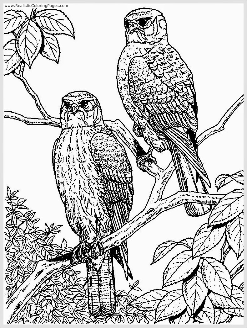 printable eagle coloring pages - photo#30