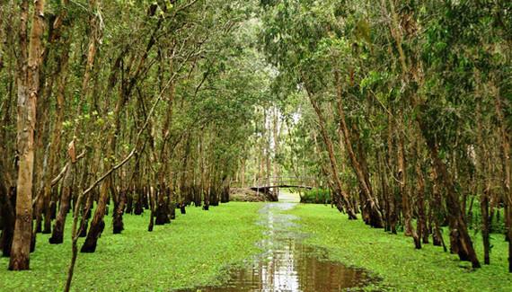 MUA CỪ TRÀM TẠI TPHCM Ở ĐÂU ? - rừng tràm tại Long An