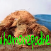 कोकोपिट को घर पर कैसे तैयार करें ( How to make coco peat at home )