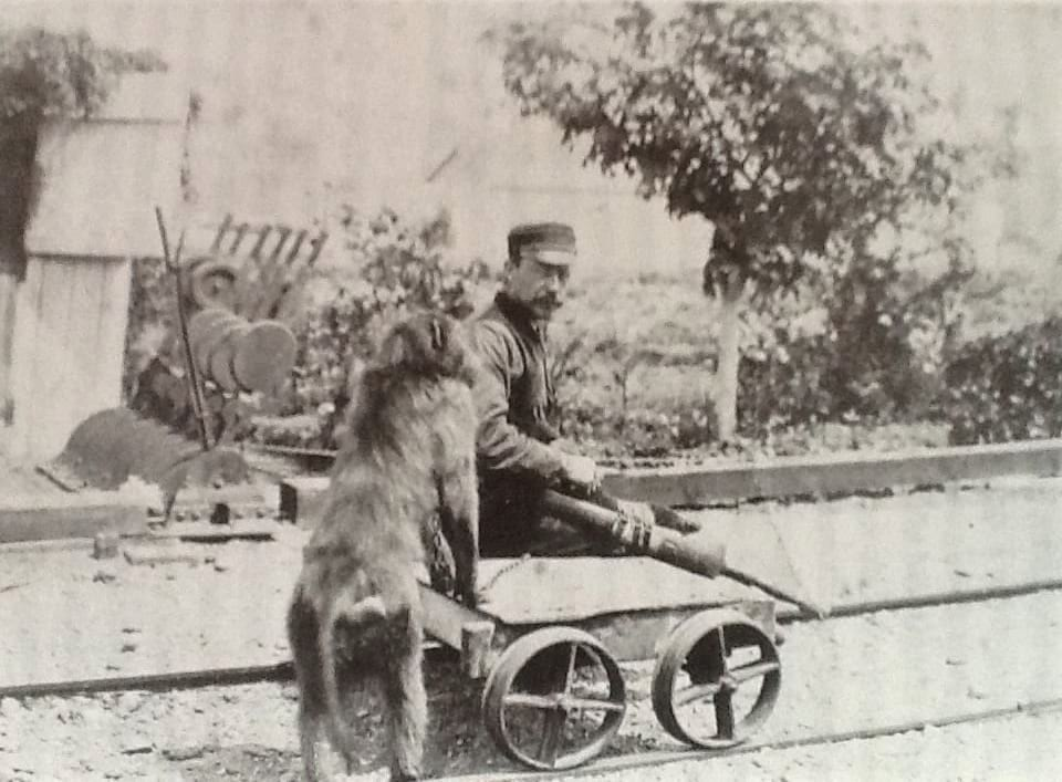 Jack The Baboon Signalman