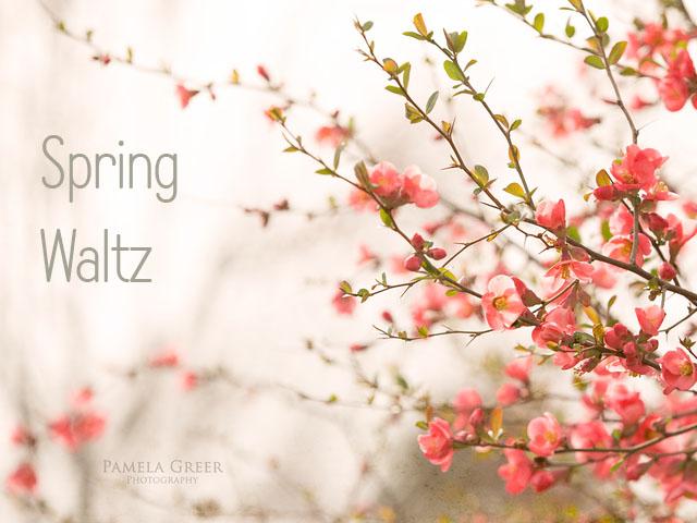 Spring Waltz Spring Flowers by Pamela Greer
