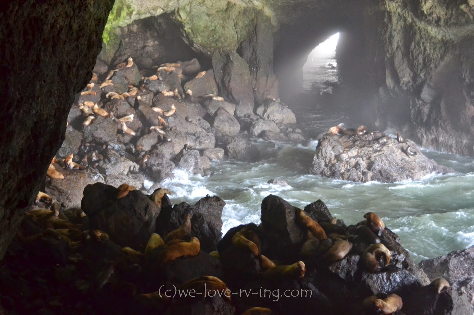 A crowd of sea lions gather in the cave