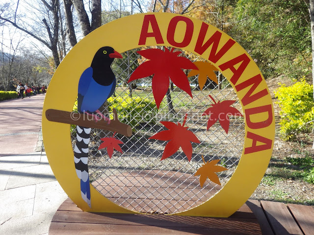 Taiwan Aowanda (奧萬大) maple season - National Forest Recreation Area