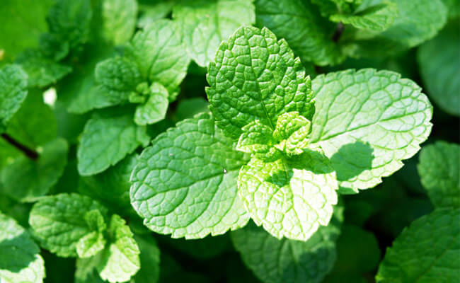 get glowing skin mint