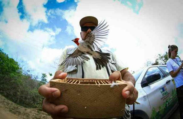 [Vídeo] Mais de 350 animais silvestres são soltos após serem resgatados durante operações da FPI em Alagoas