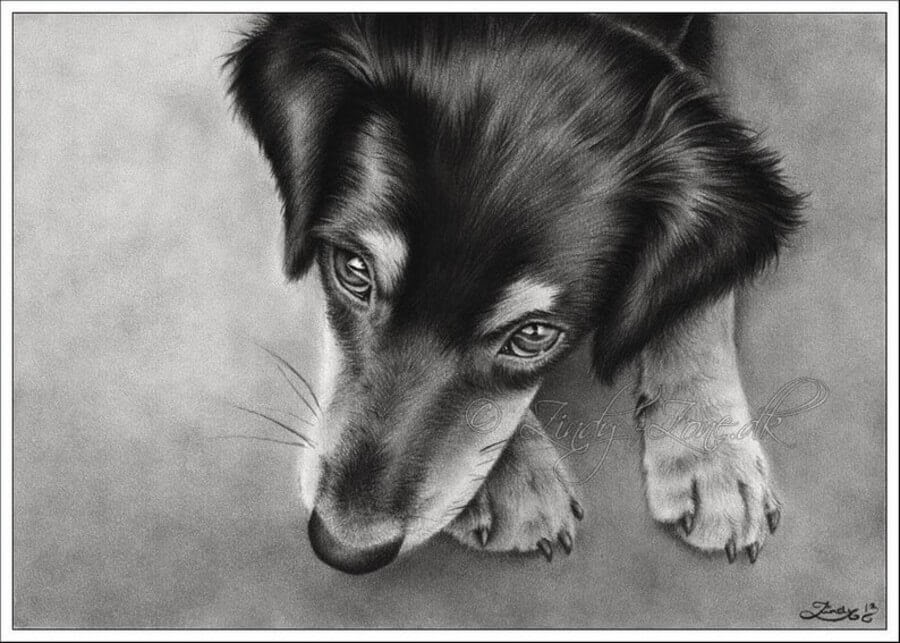 08-Dog-Labrador-Retriever-Zindy-Nielsen-Fantasy-Animals-Meet-Realistic-Ones-www-designstack-co